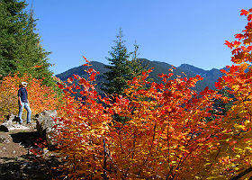 View of Innkeeper hiking in the mountains surrounded by bright orange maple leaves and purple mountains.